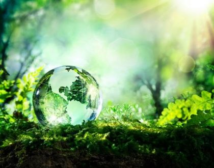 World Environment Day. How can I save the environment? Its time #fornature